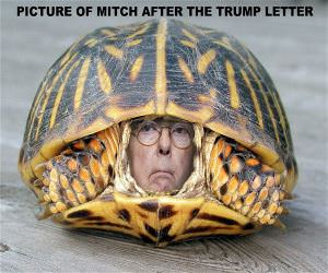 Picture Of Mitch