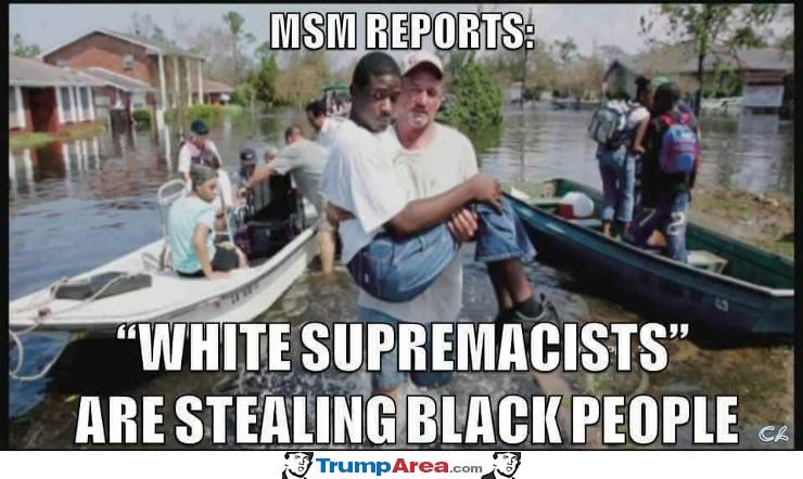 MSM reports