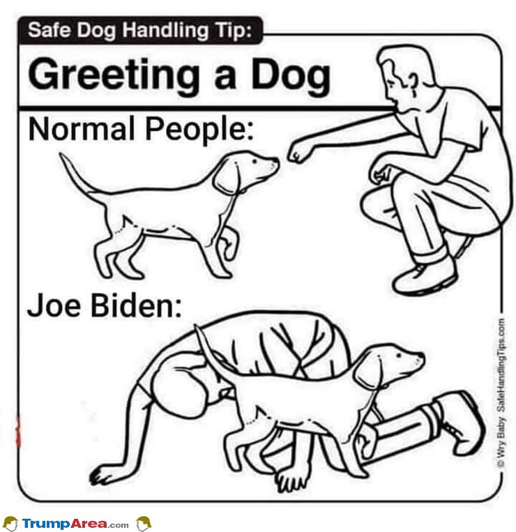 Greeting The Dog