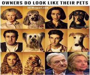 Owners Who Look Like Their Pets