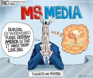 the MS media