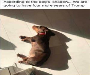 The Dogs Shadow